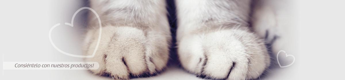 Fondo Gato
