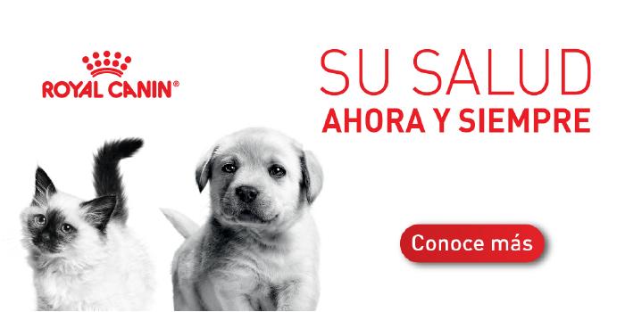 Banner Royal Canin - Mobile - venta de productos para mascotas