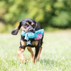 Juguete-Kong-Perro-Peluche-Cozie-Conejo-Medium
